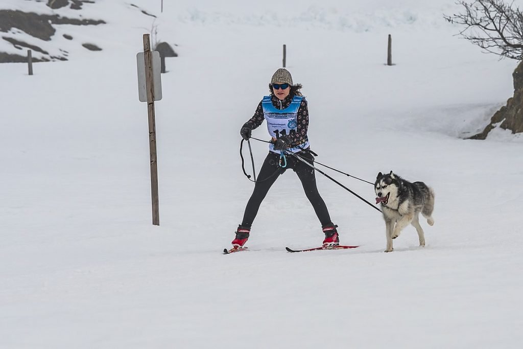 Skijoring cross-country skier