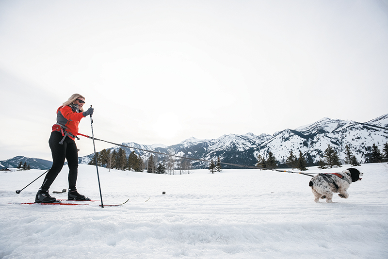 xc skiing with dogs