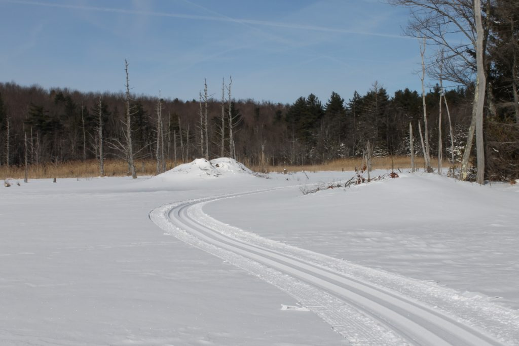 Track set on Beaver pond